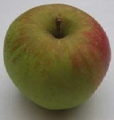 apple_milogibson.jpg
