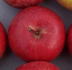 apple_peckspleasant.jpg