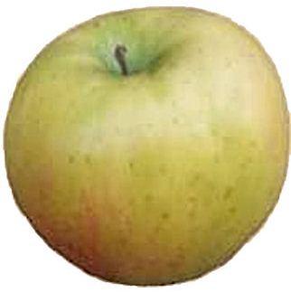 apple_tolmansweet.jpg