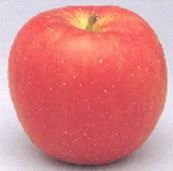 apple_tsugaru.jpg