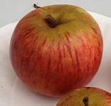 apple_marechal.jpg