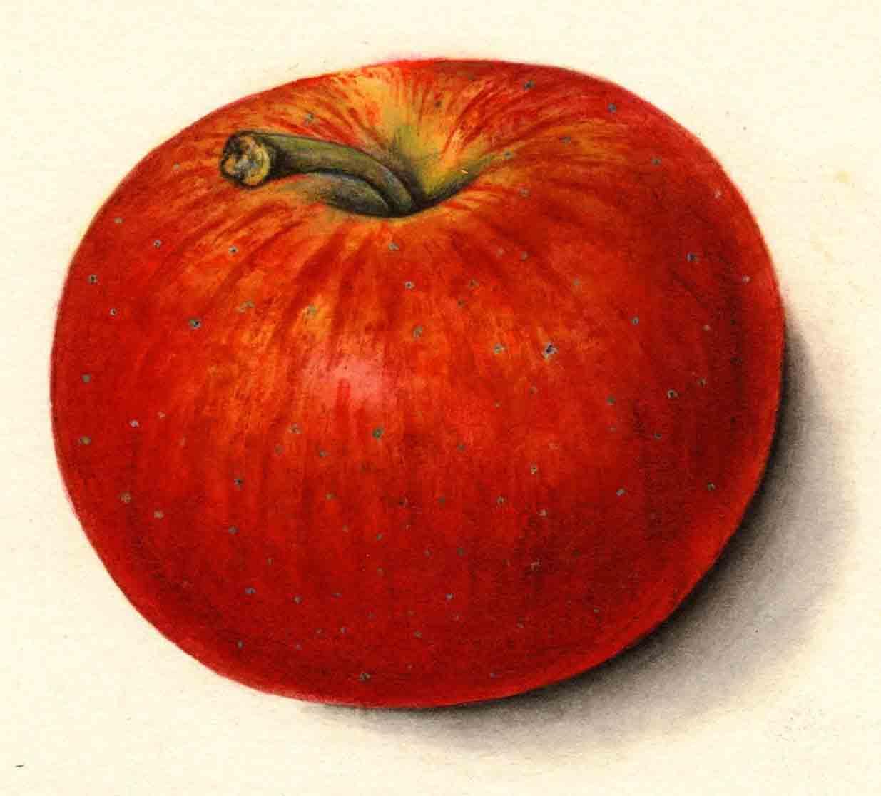 apple_grindstone.jpg