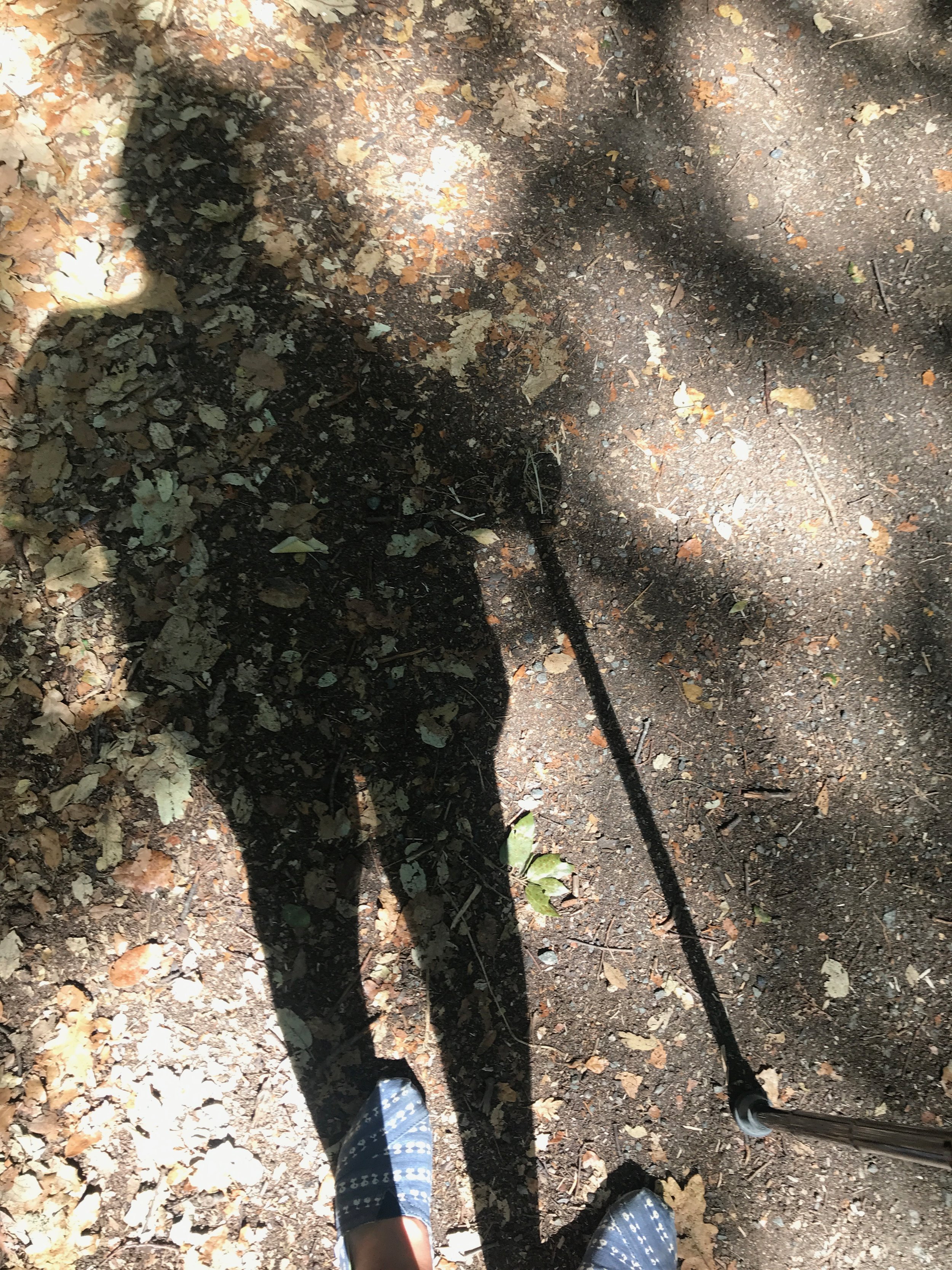 shadow of girl with walking stick in forest