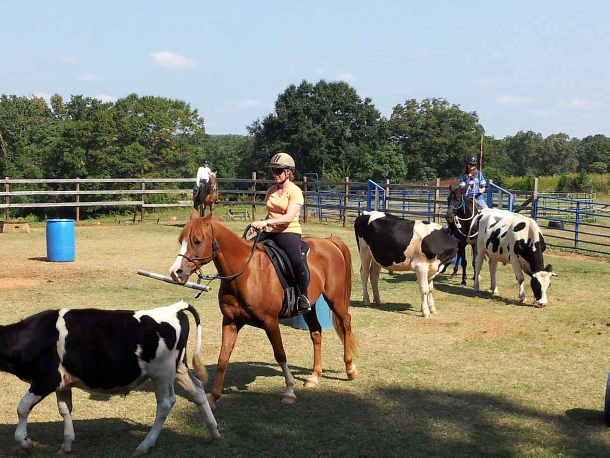 Horseback Riding Lessons Upstate Horsemanship