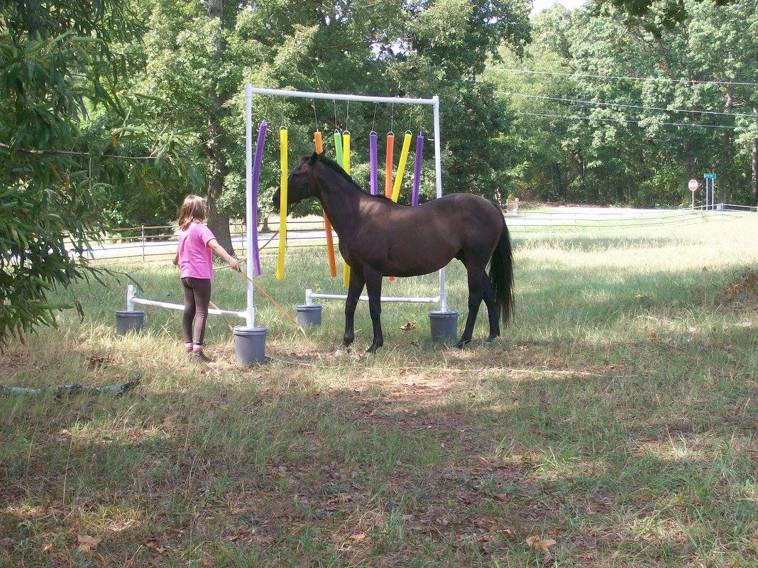 Lessons Horse Horseback Riding Training
