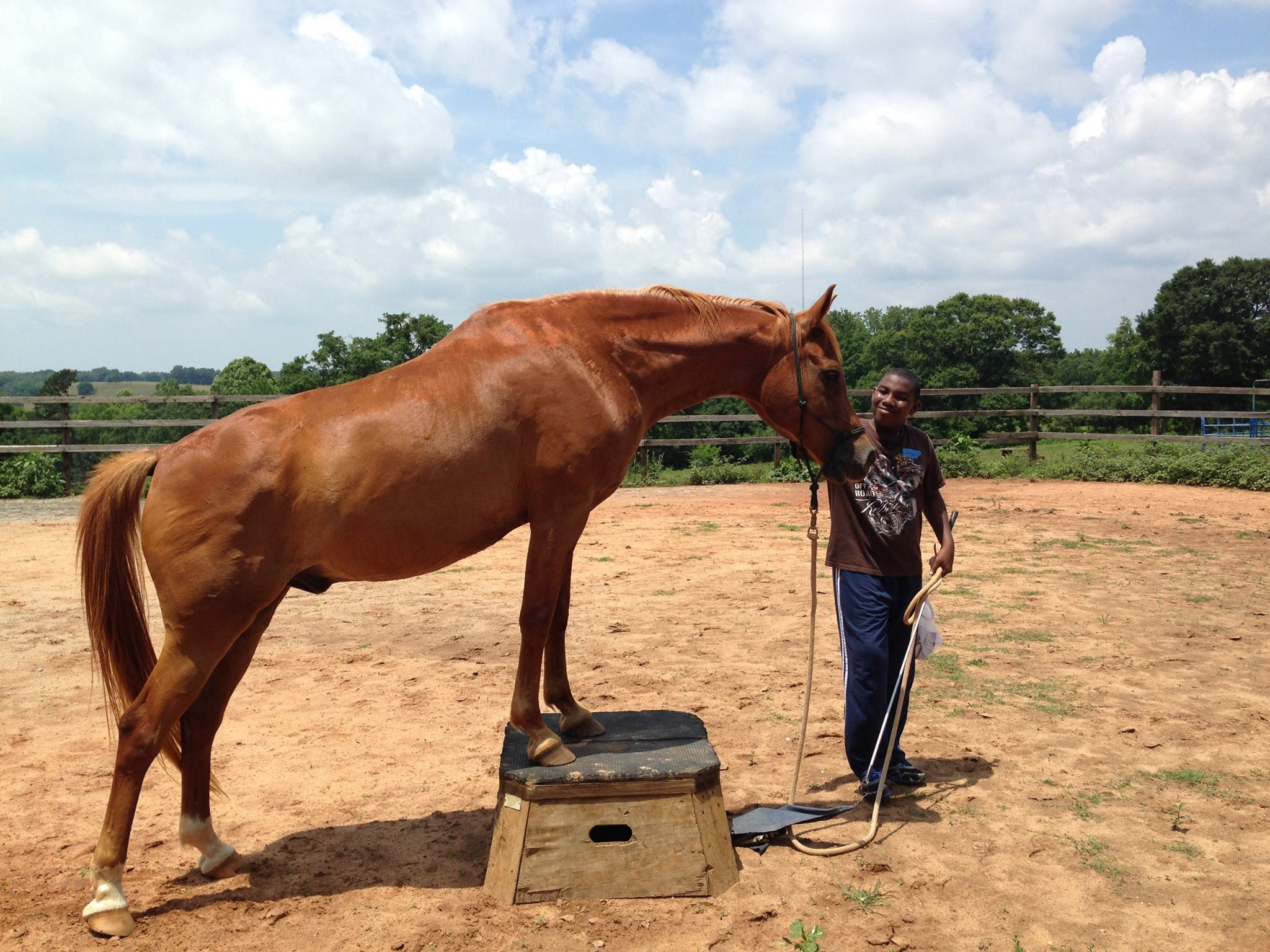 Horses Therapy Lessons Equine Anderson Alternative School