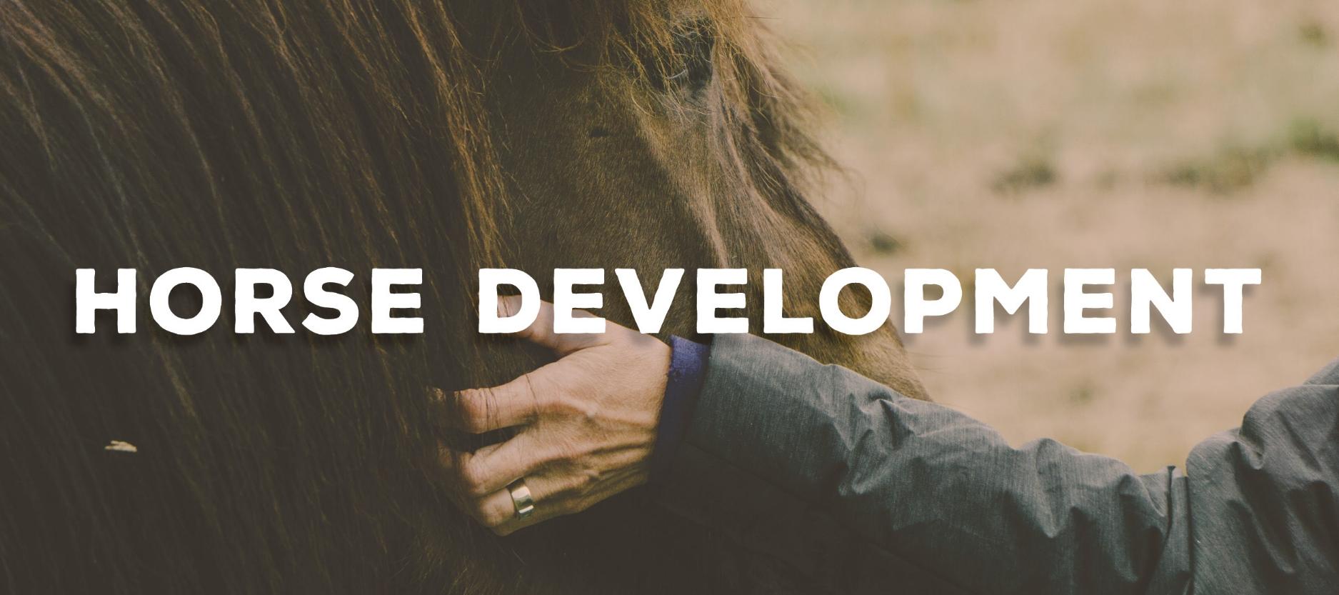Horse Development Horsemanship Lessons Anderson Upstate
