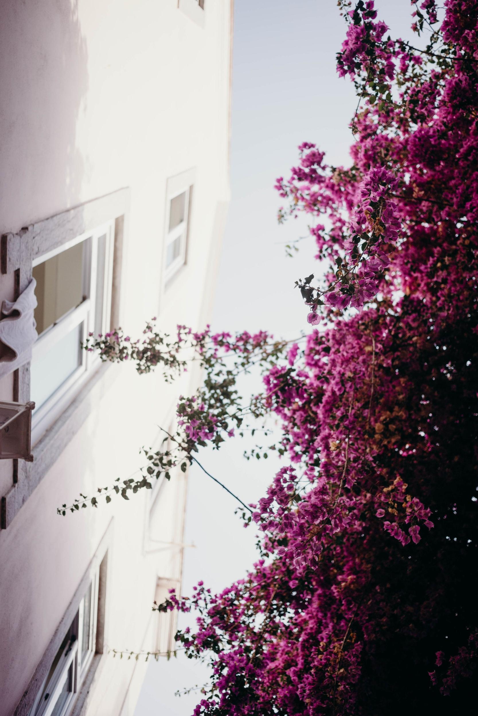 Our Portugal Travel Diary: Lisbon, Porto, and More | On the Street Where We Live (aretherelilactrees.com)  Cascais,Boca do Inferno, Museu Condes de Castro Guimaraes, Ribeira Beach