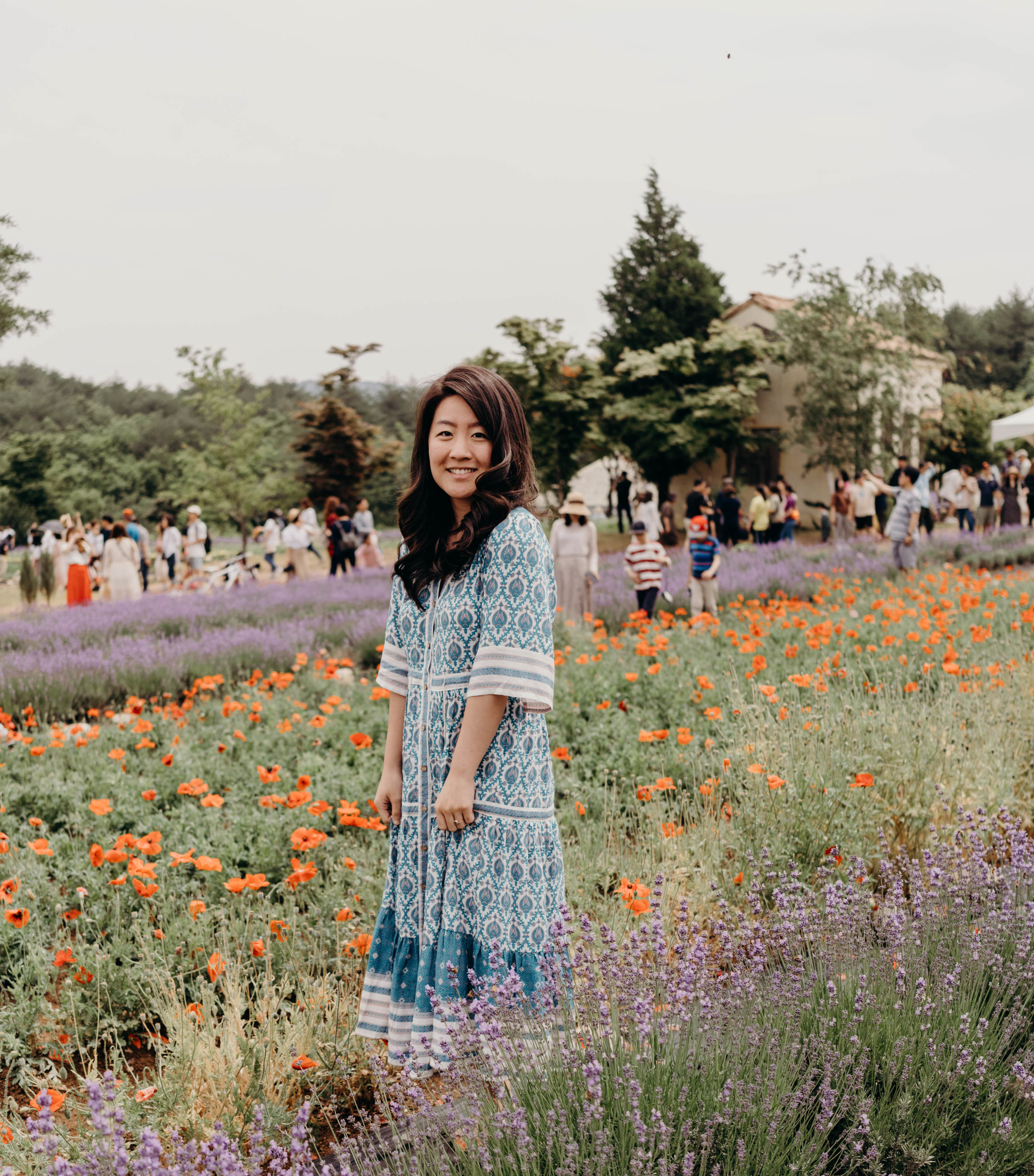 Hani Lavender Farm in Goseong, South Korea | On the Street Where We Live ( aretherelilactrees.com )