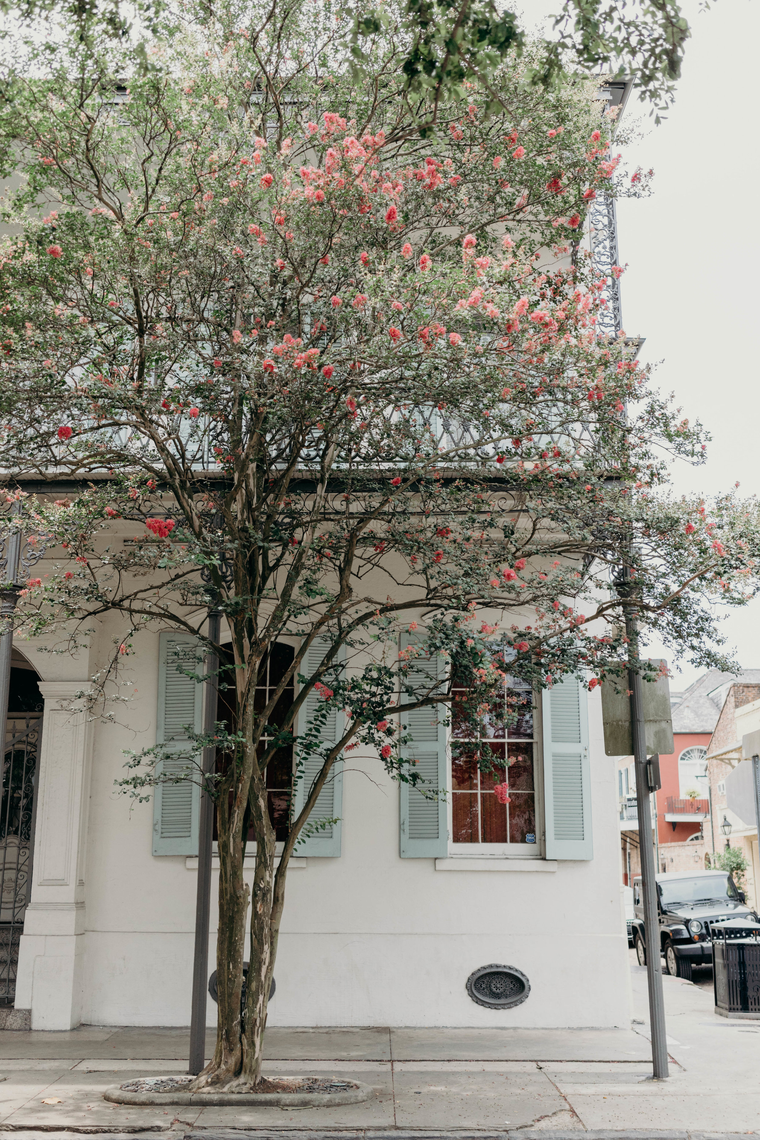 Snapshots of a Summer in the South | On the Street Where We Live ( aretherelilactrees.com )  The Big Easy, NOLA, New Orleans, Louisiana, Chartres Street, architecture, crepe myrtle