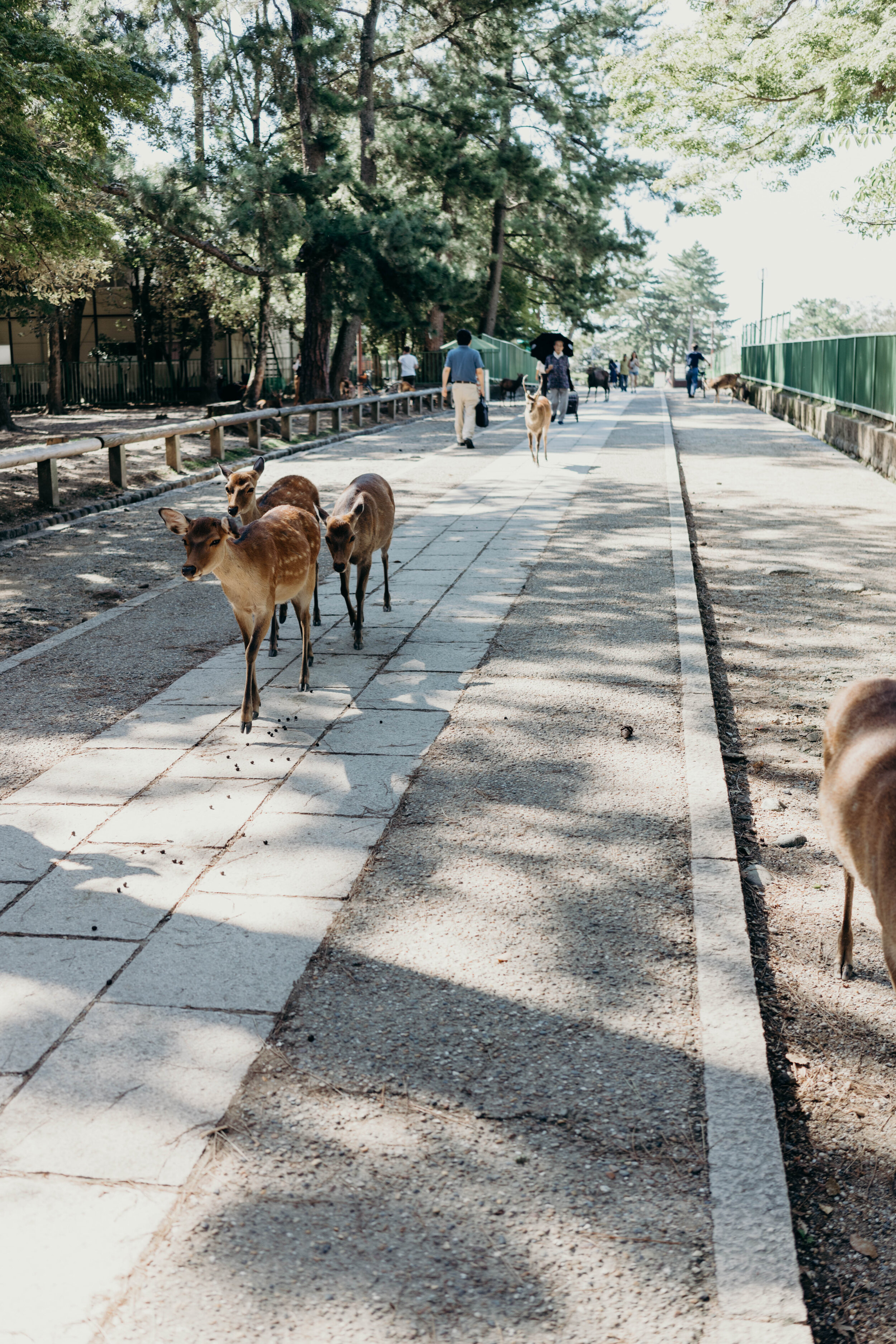 Making Friends with the Deer at Nara Park, Japan | On the Street Where We Live ( aretherelilactrees.com )  Nara, Japan, Nara Park, Nara Deer Park, deer, Kyoto day trip, Osaka day trip
