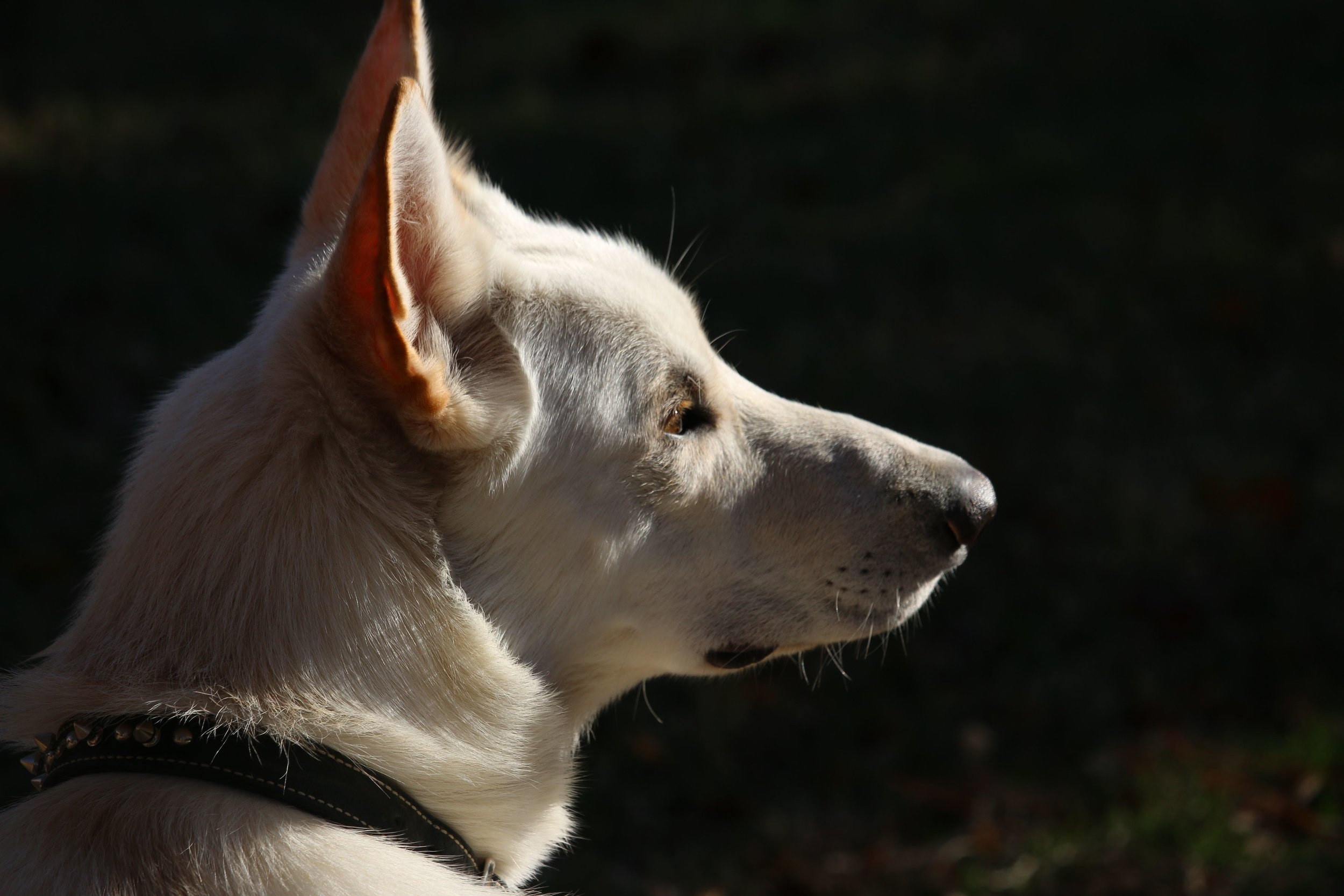 Background History Checked - All Happy Tails Pet Pal, LLC. dog walkers and pet sitters must go through a background history check and review before becoming a member of our pack (for non-dog owners the word team can be substituted for the word pack here).