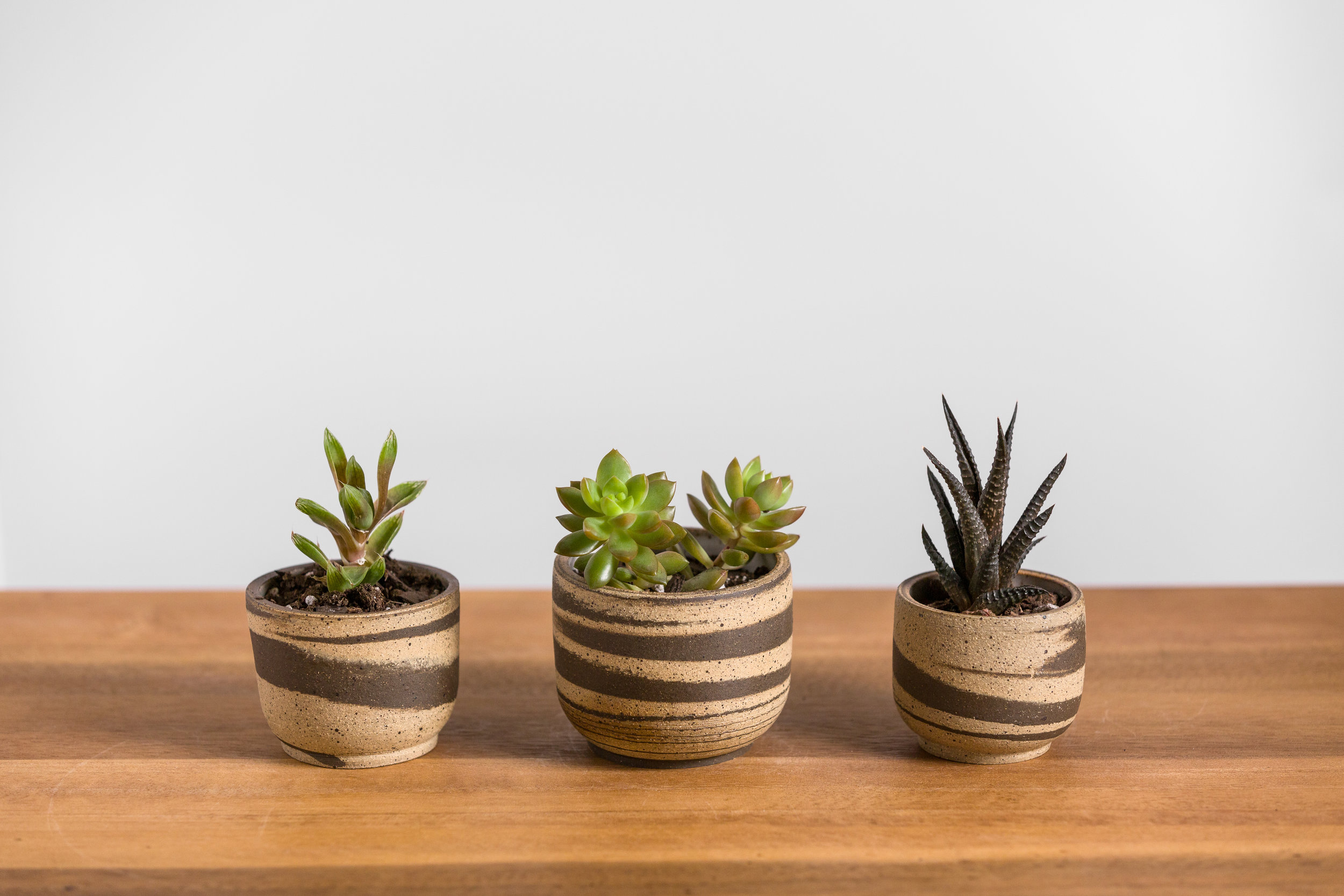 Marbled Succulent Planter - Retail $22