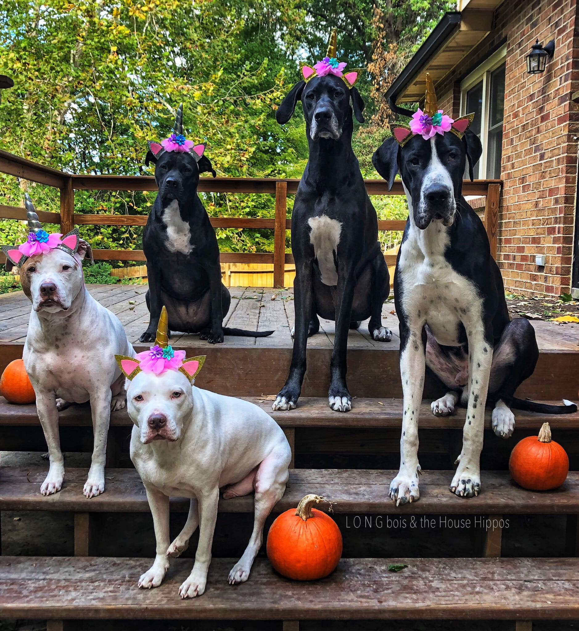 UNICORN DOGS.jpg