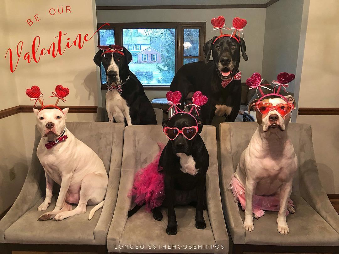 Valentines Dogs.jpg