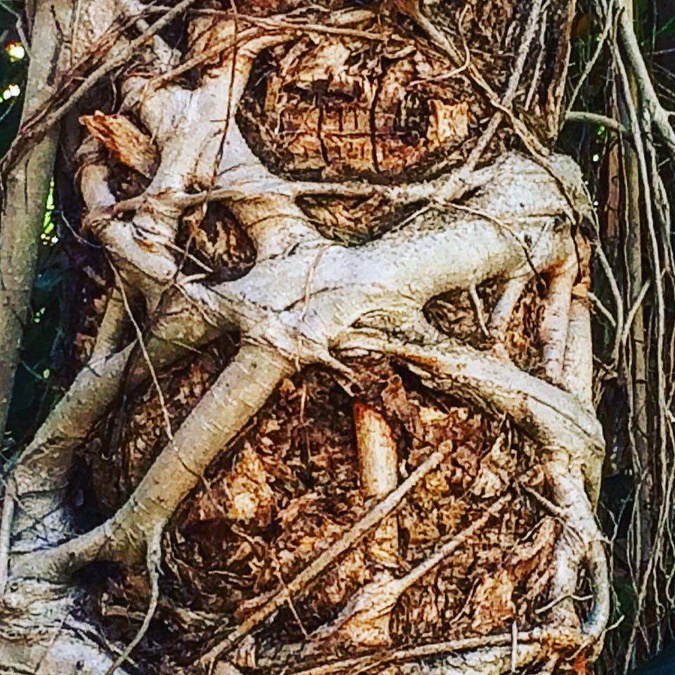 alien tree.jpg