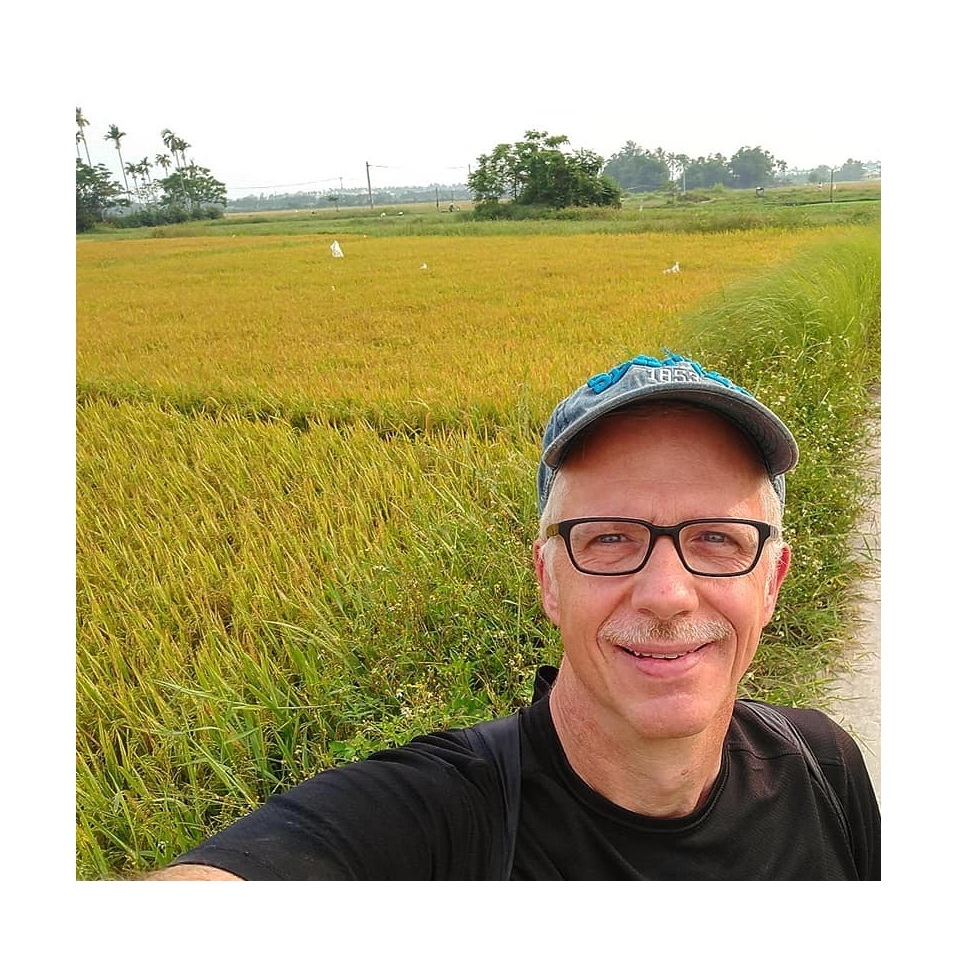 Right before harvesting, the rice fields are a stunning mix of gold and green.