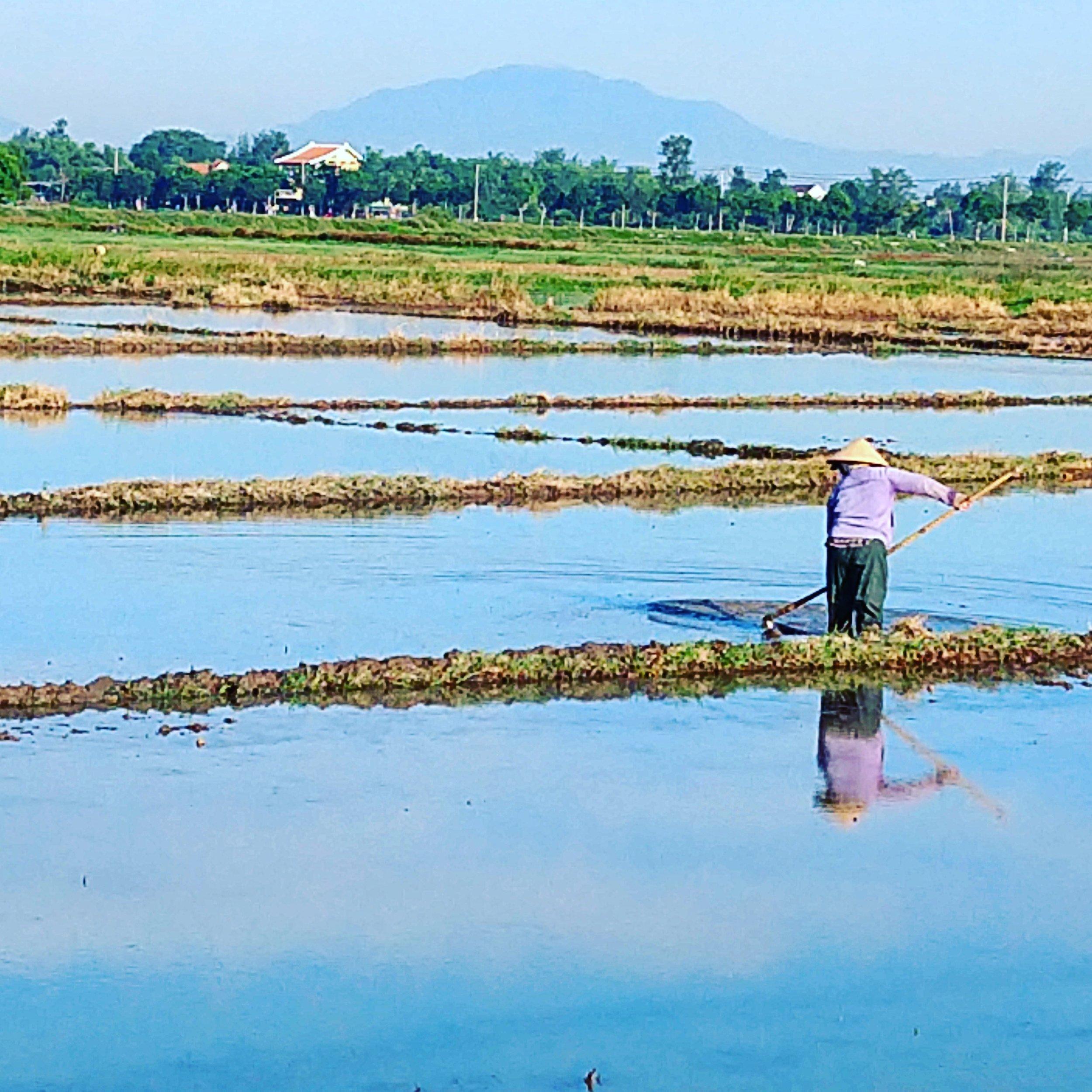 ricefieldhoeing.jpg
