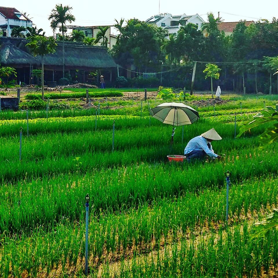 ricefieldworkergarden.jpg