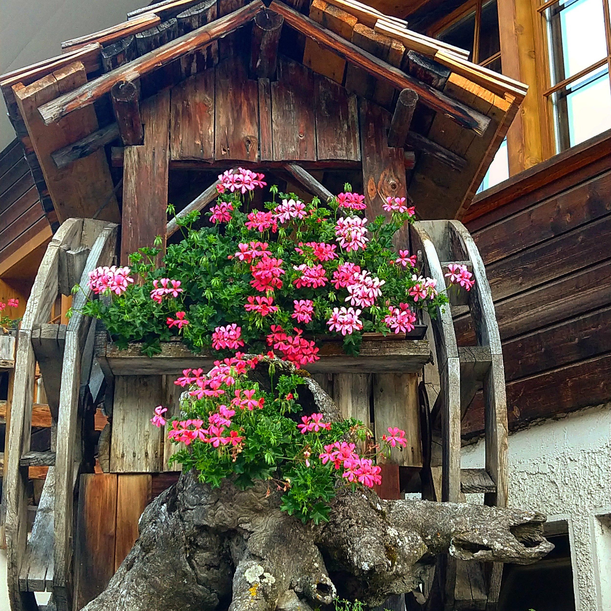 grimentzflowerwheels.jpg