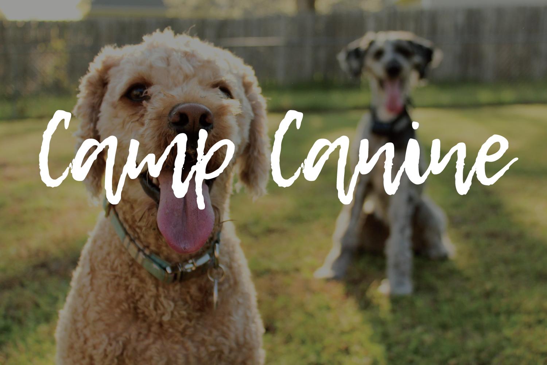 camp canine print
