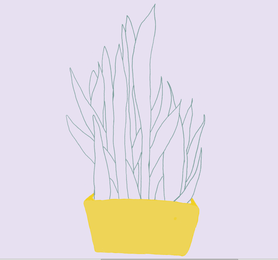 plant day1.PNG