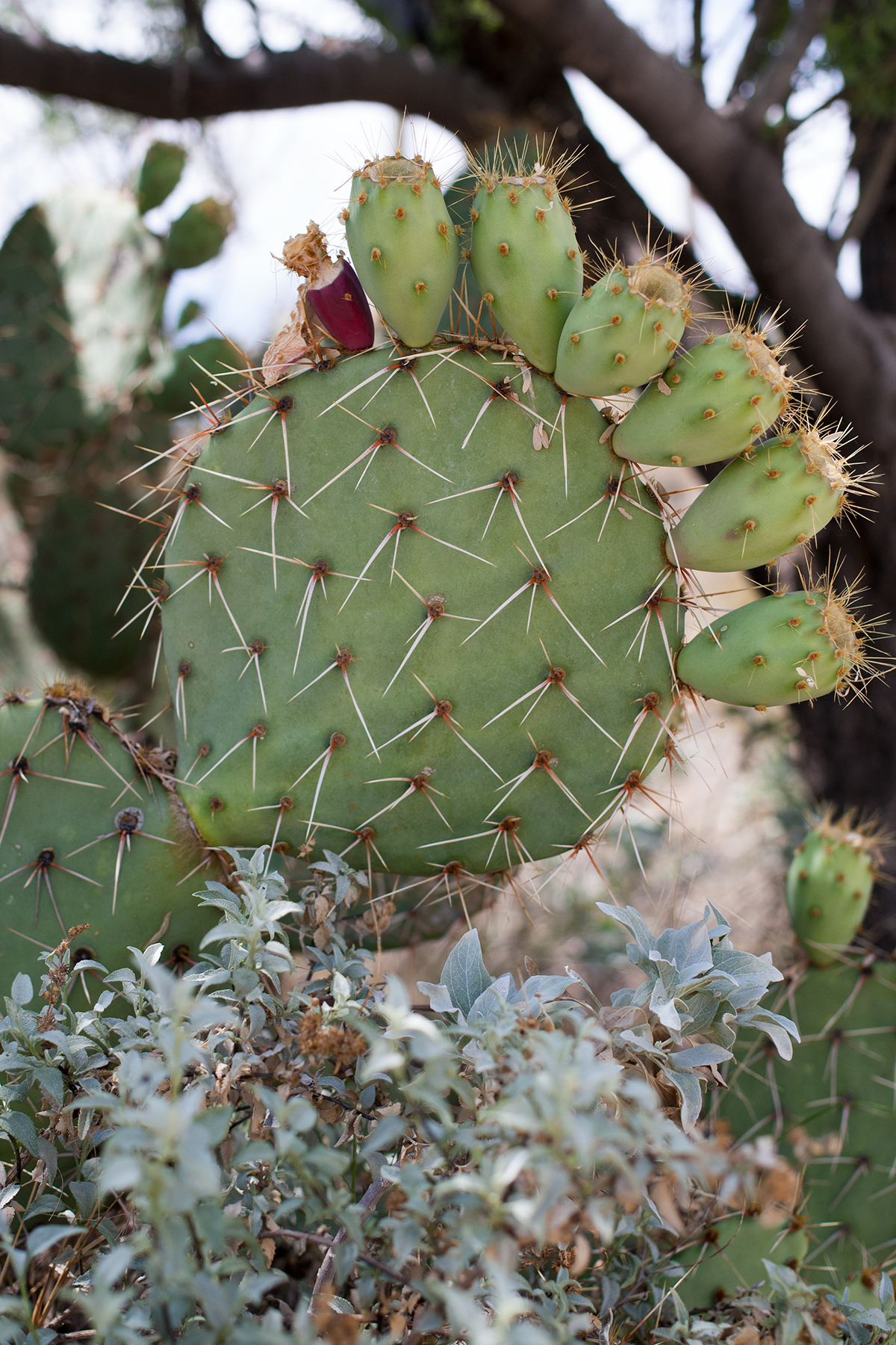 Tucson-desert-museum1.png