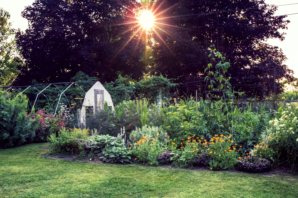 A Monarch Waystation Garden -- Click on picture to learn how!