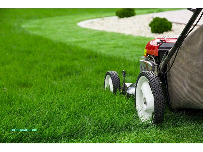 The rise of the lawn.  Image Source: ©  Prasannanossam3  / Wikimedia Commons /  CC-BY-SA-4.0