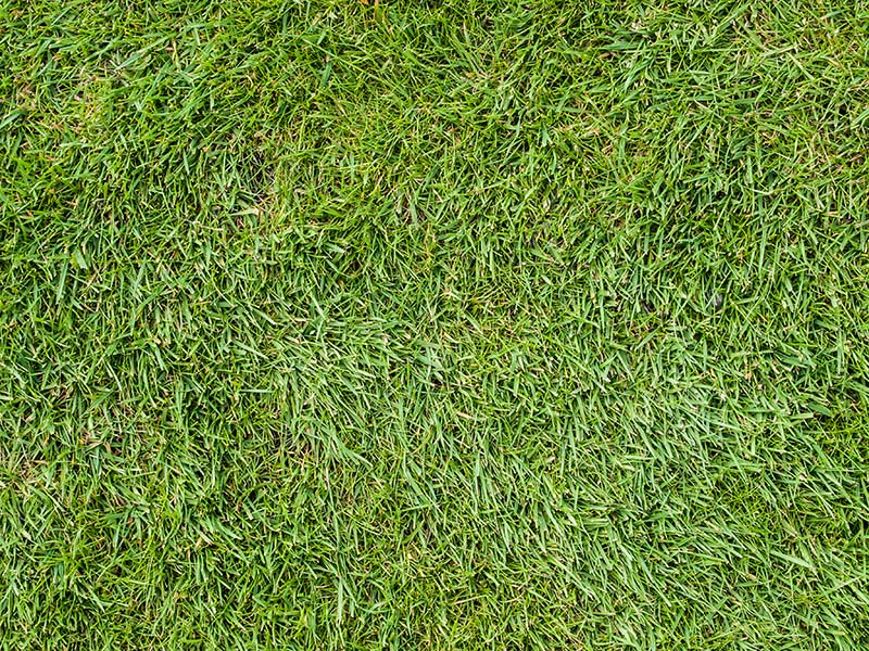 Turf grass.  Image Source: ©  William Warby  /  Grass Texture  /  CC BY 2.0