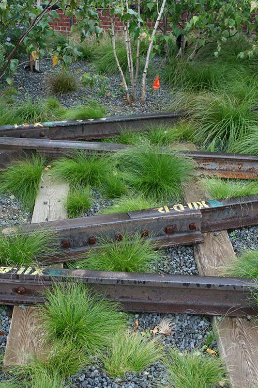 Native grasses and sedges planted along the High Line in NYC.  Image Source: ©  Paul Simpson  / The High Line 9 /  CC BY 2.0