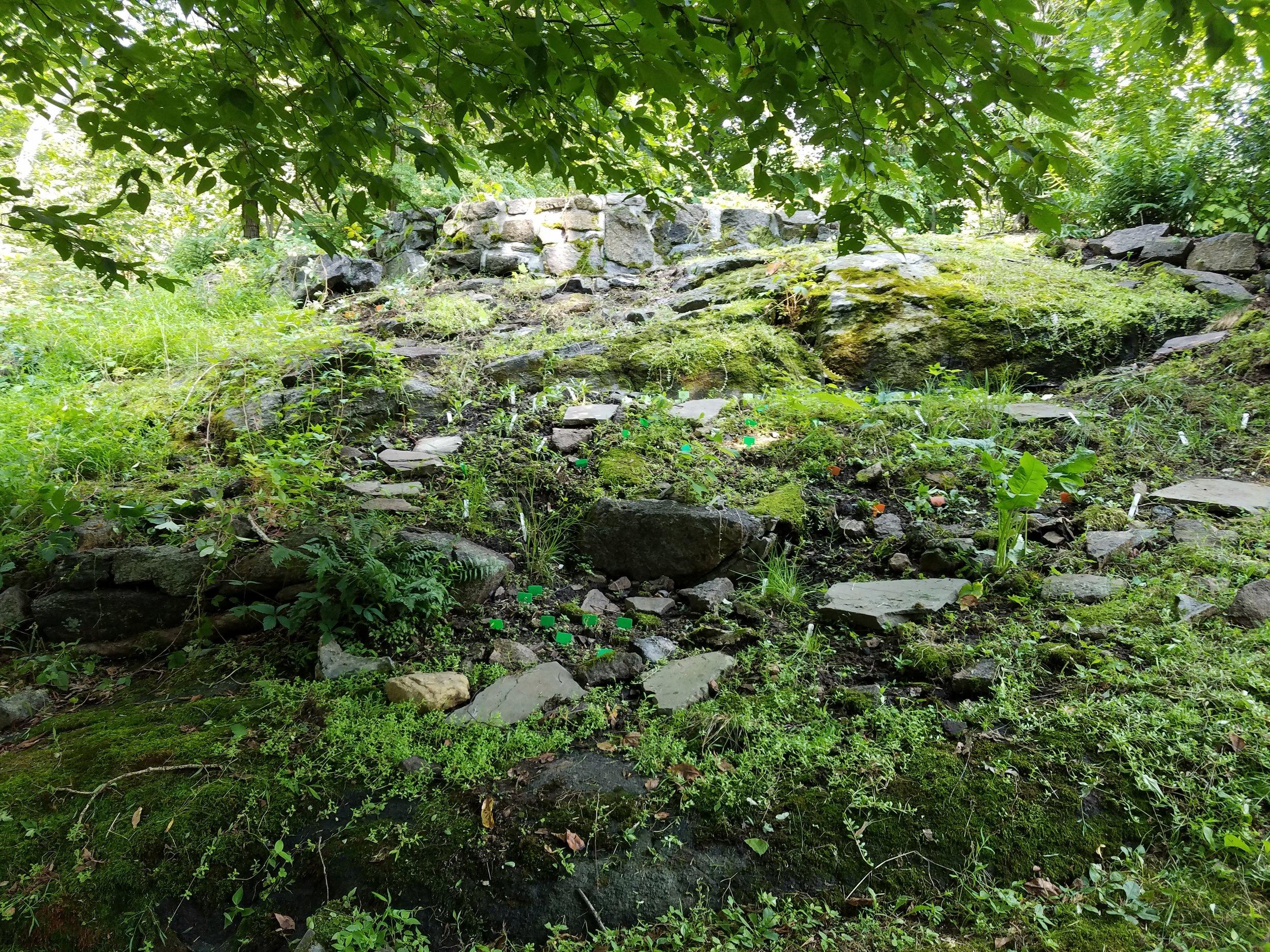 Native Rock Garden in Cortlandt