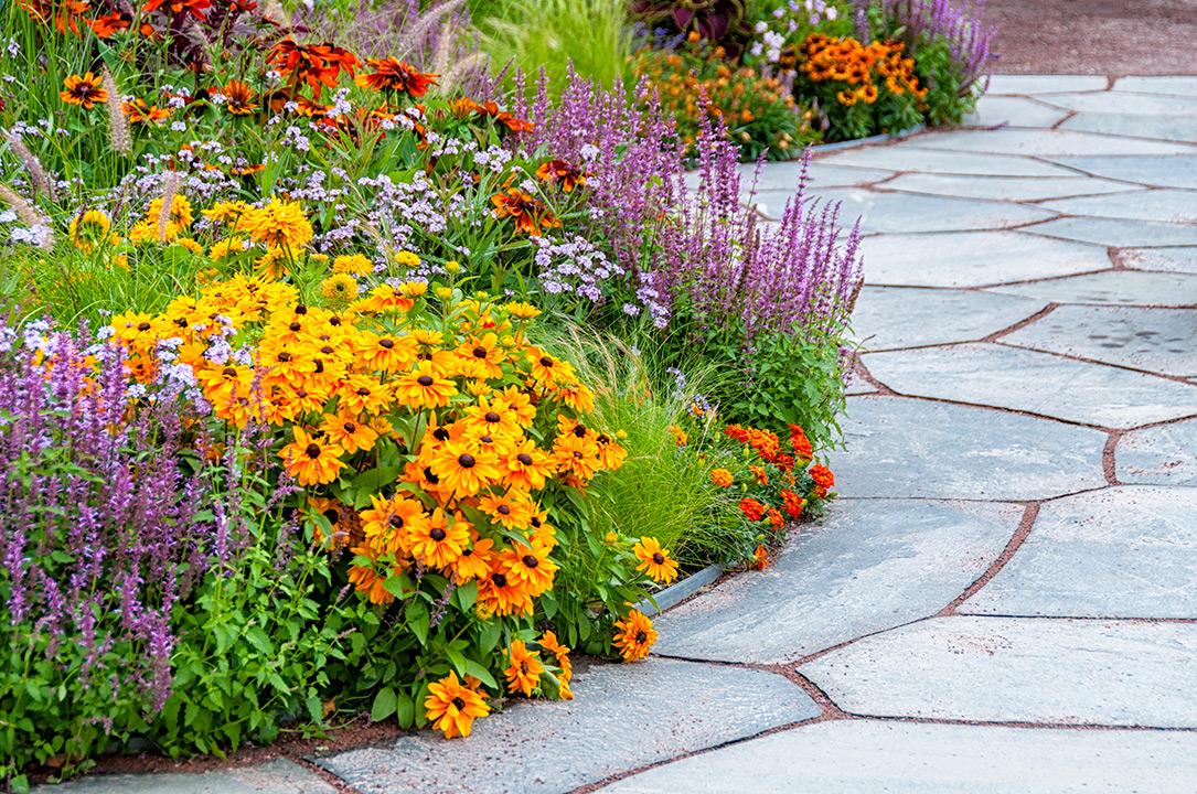 New Plants, Shrubs, Trees &Color -