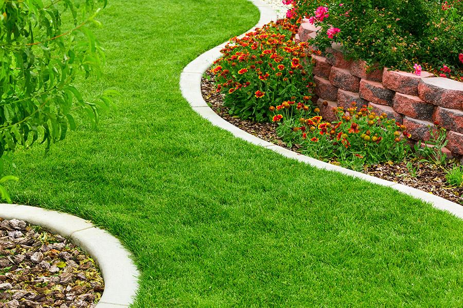 Backyard Maintenance -