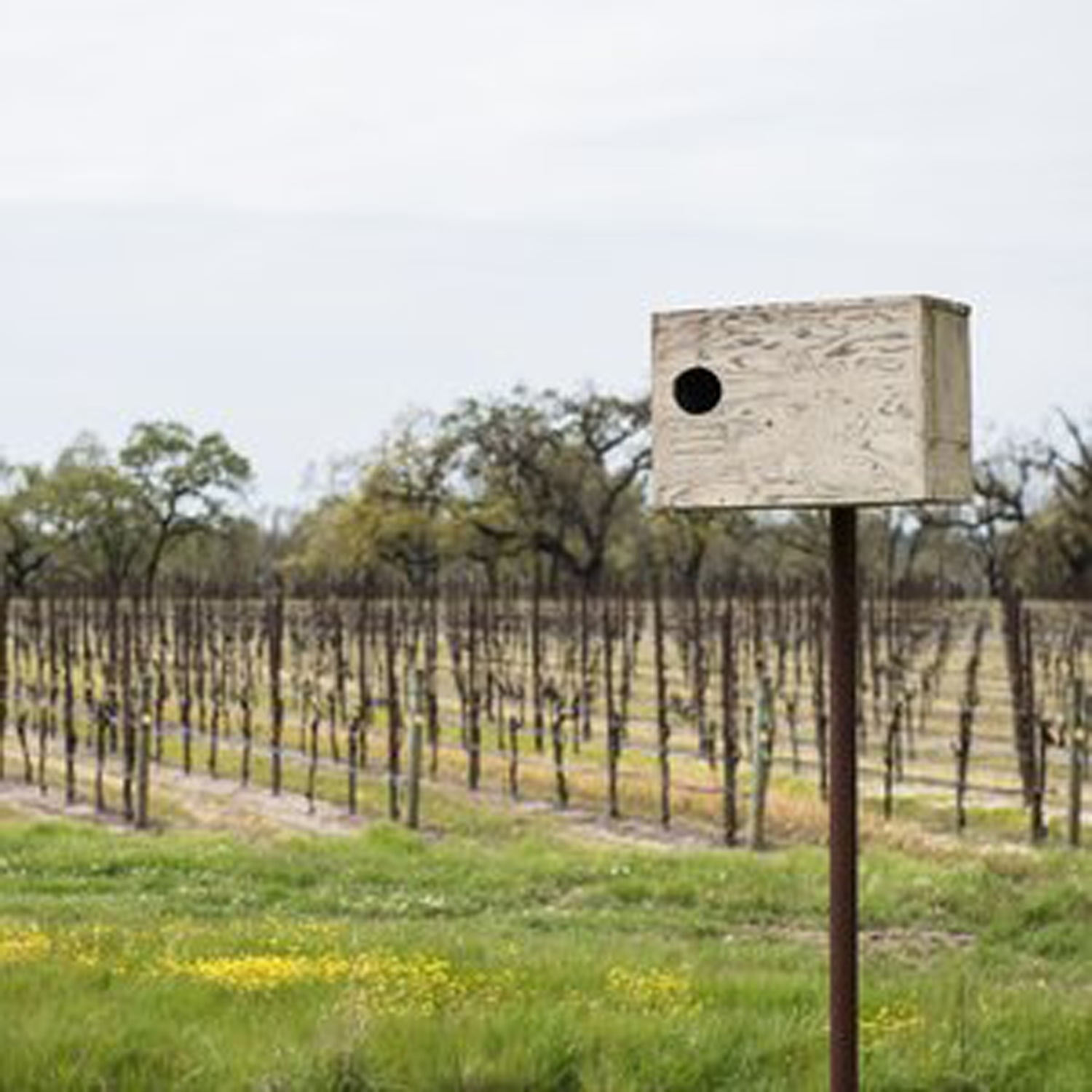 Natural_pest_Control_in_the_vineyards.jpg