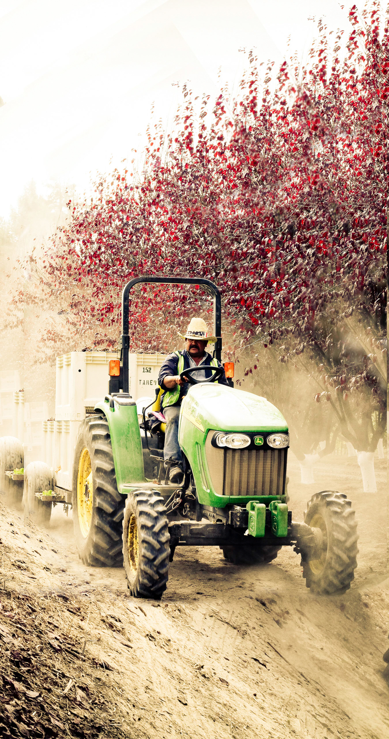 driving_a_tractor_through_the_Burnside_road_vineyard.png