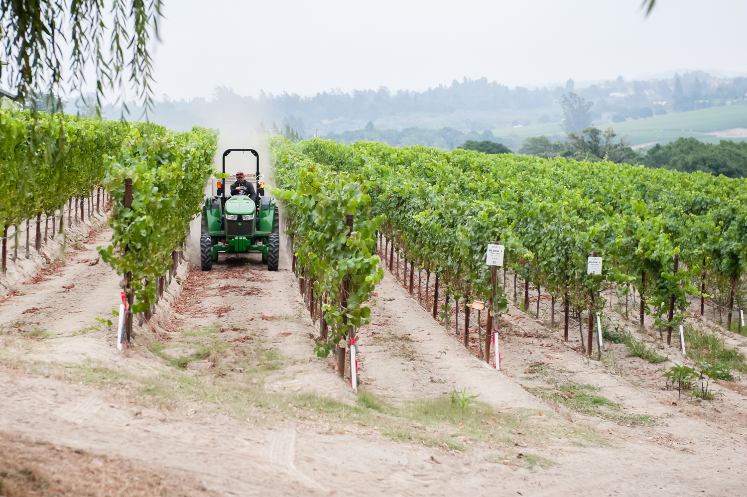 Tractor_plowing_through_Mary's_vineyard_rows.png