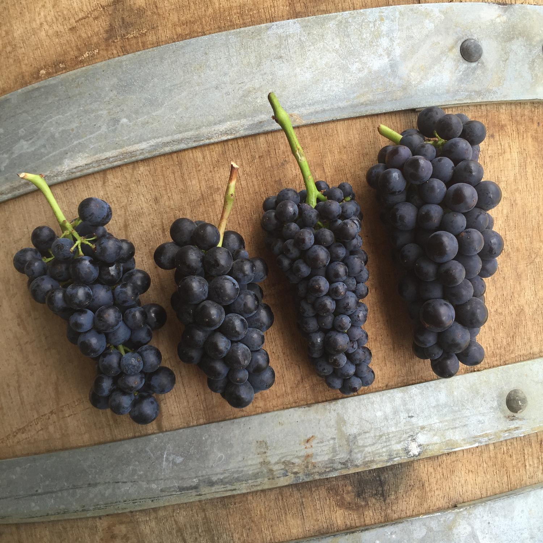 Grapes_on_barrel.png