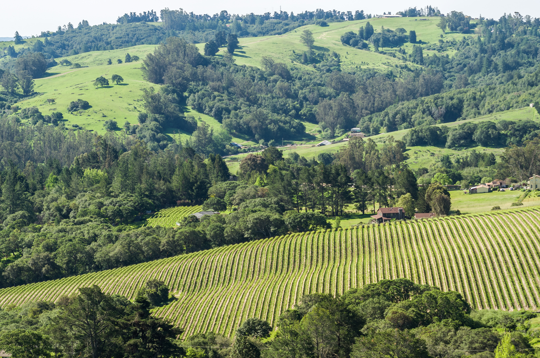 Aerial_shot_of_Cider_Ridge_Vineyard.png