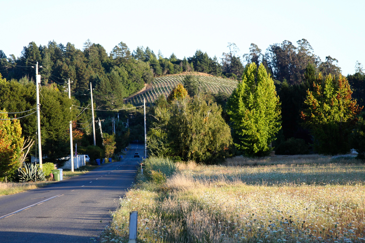 Road_leading_to_Sexton_Hill.png