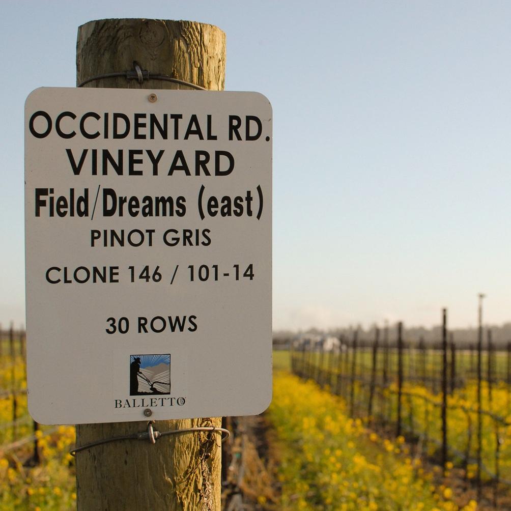 Occidental_road_vineyard_sign.png