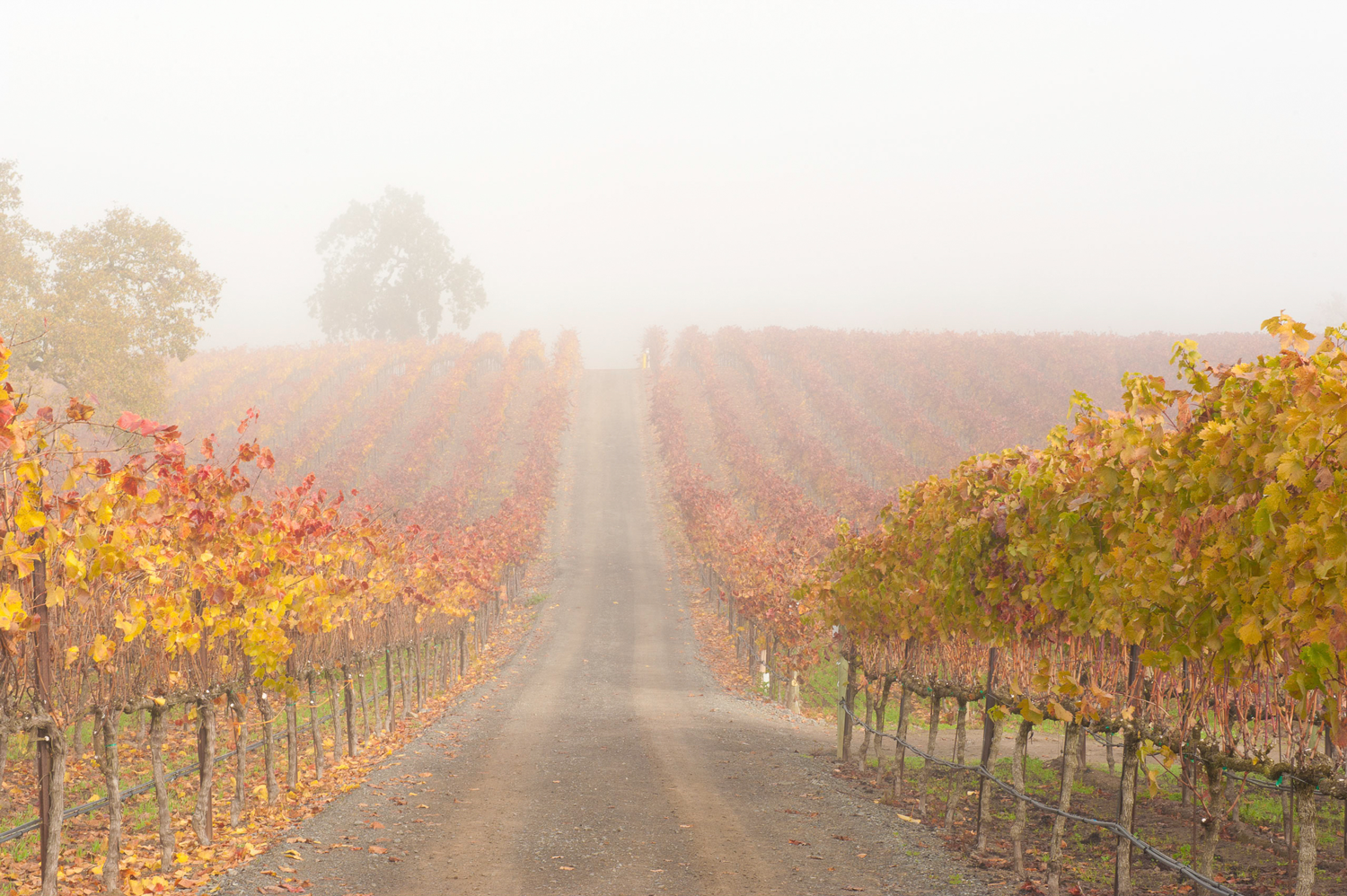 Road_to_nowhere_through_the_BCD_vineyards.png