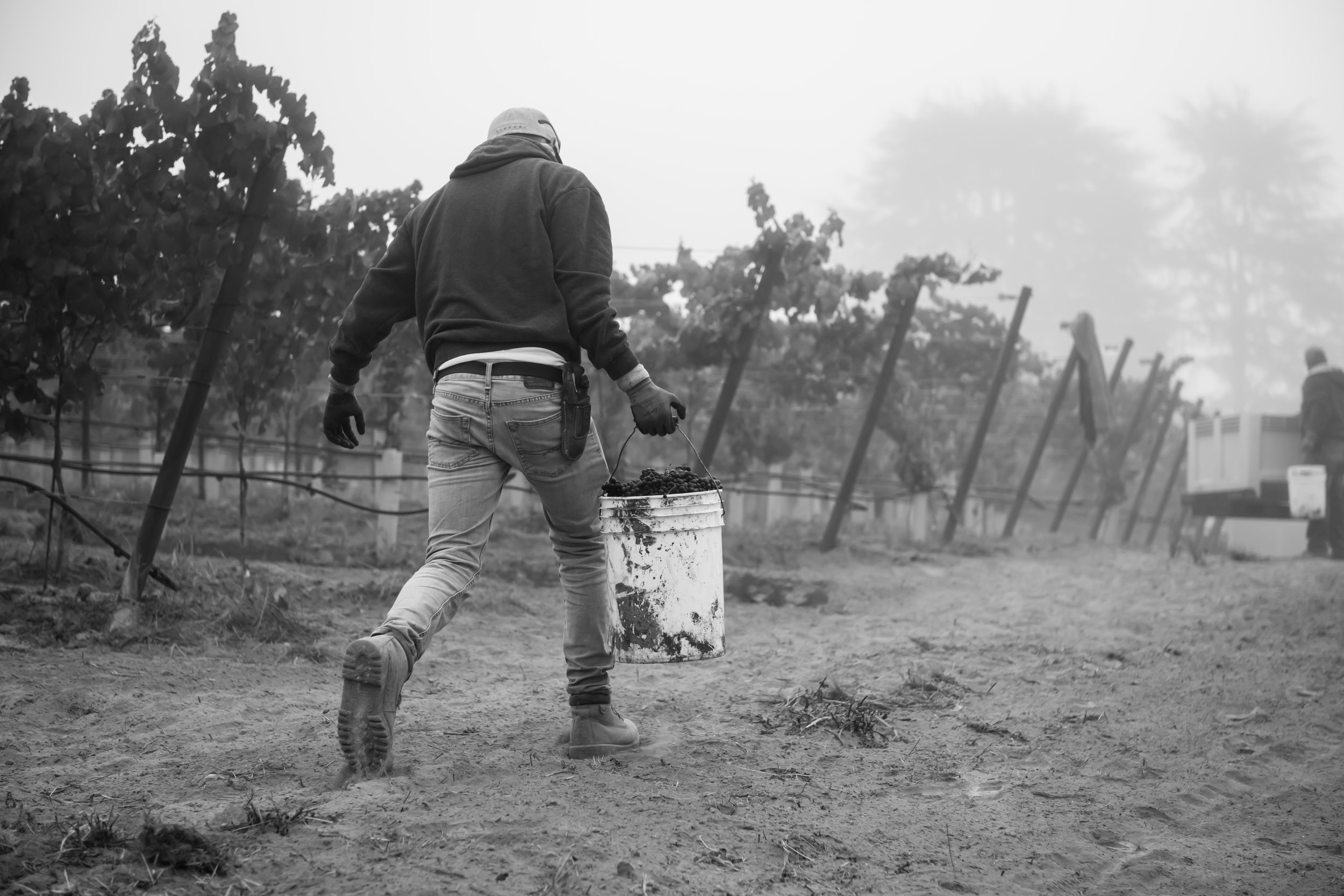 Black_and_white_shot_of_vineyard_worker.jpg