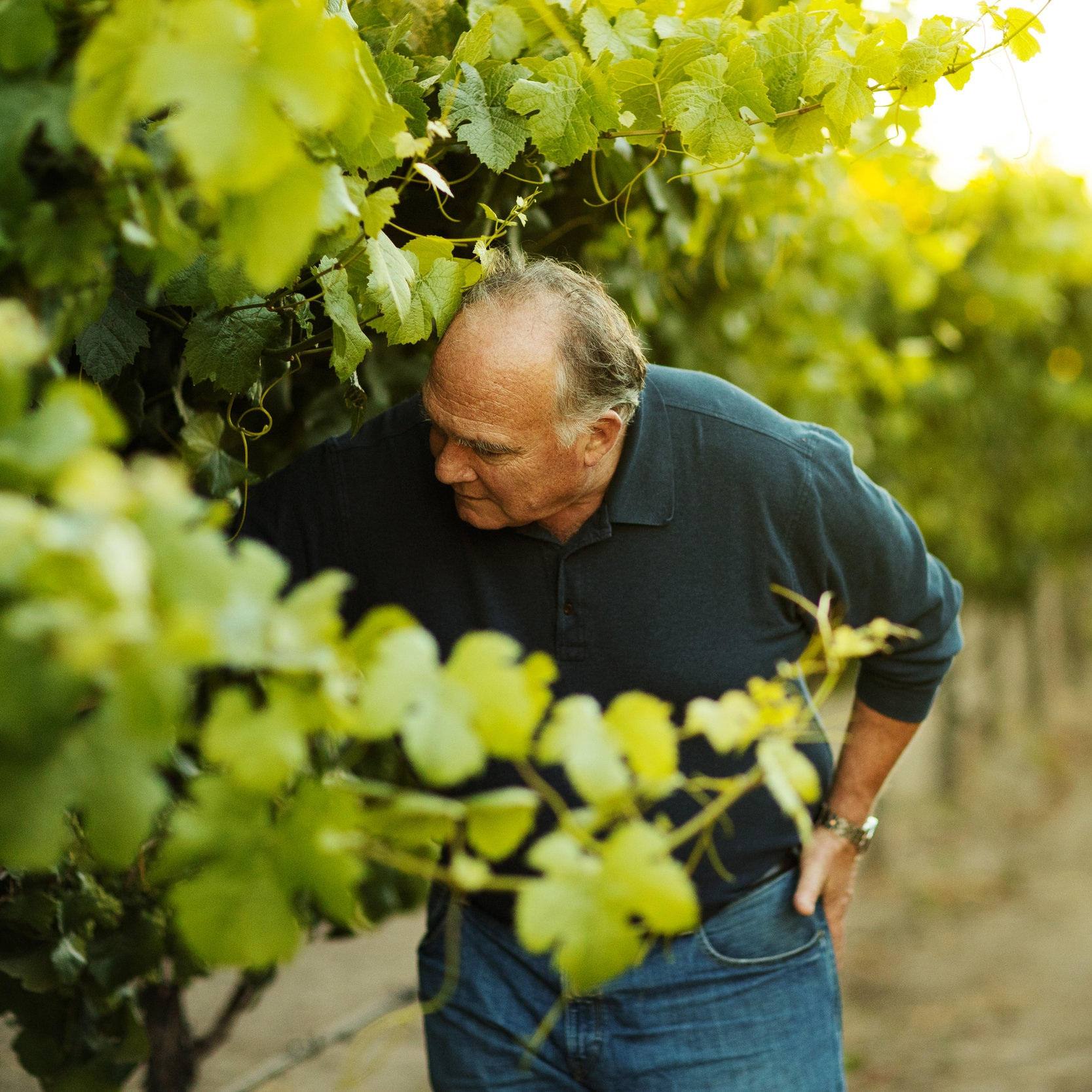 John_checking_on_the_grapes.jpg
