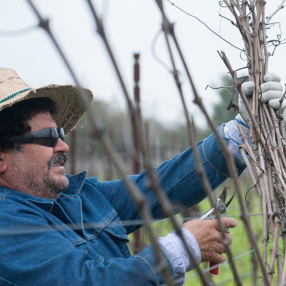 winter_vineyard_maintenance_headshot_of_vineyard_worker.png