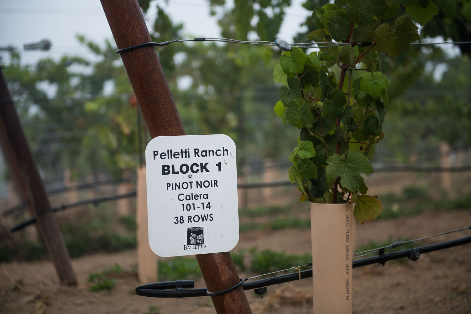 Pelletti_Ranch_Sign.jpg