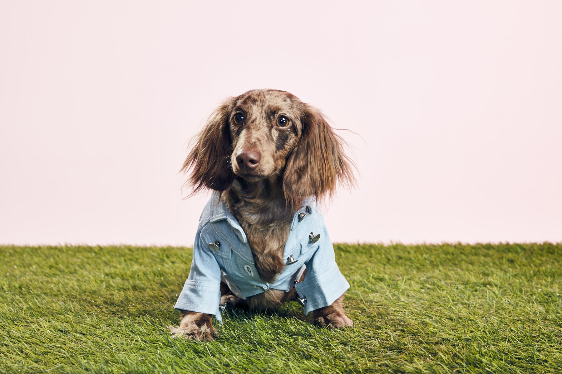 BOJI1/Dachshund - Small but mighty, fashionista with an eye for style, always ready for an adventure.