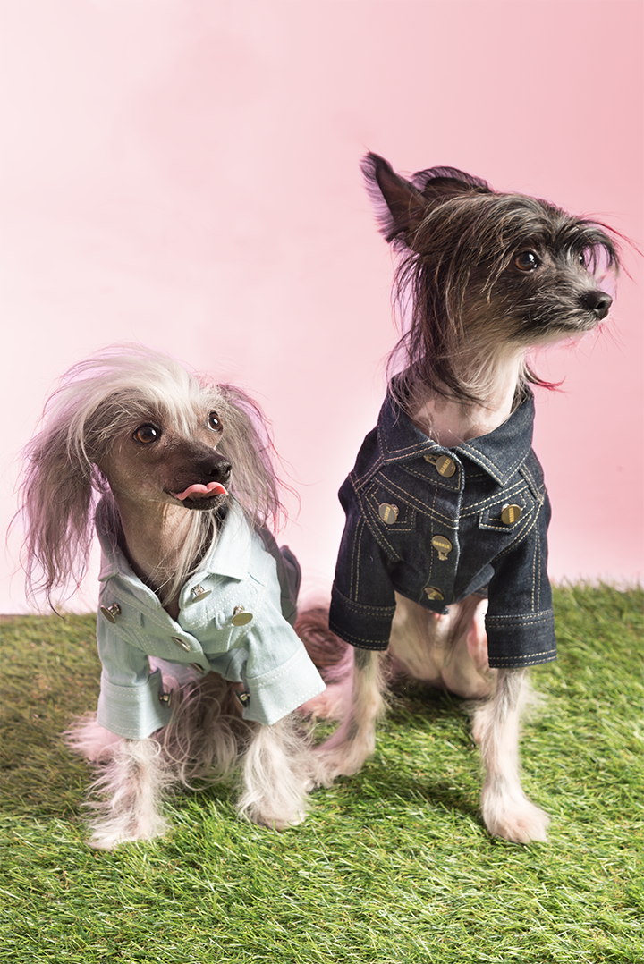 Meet Aero and Xenon - Age: 2 Years OldBreed: Chinese CrestedHometown: Toronto, ON