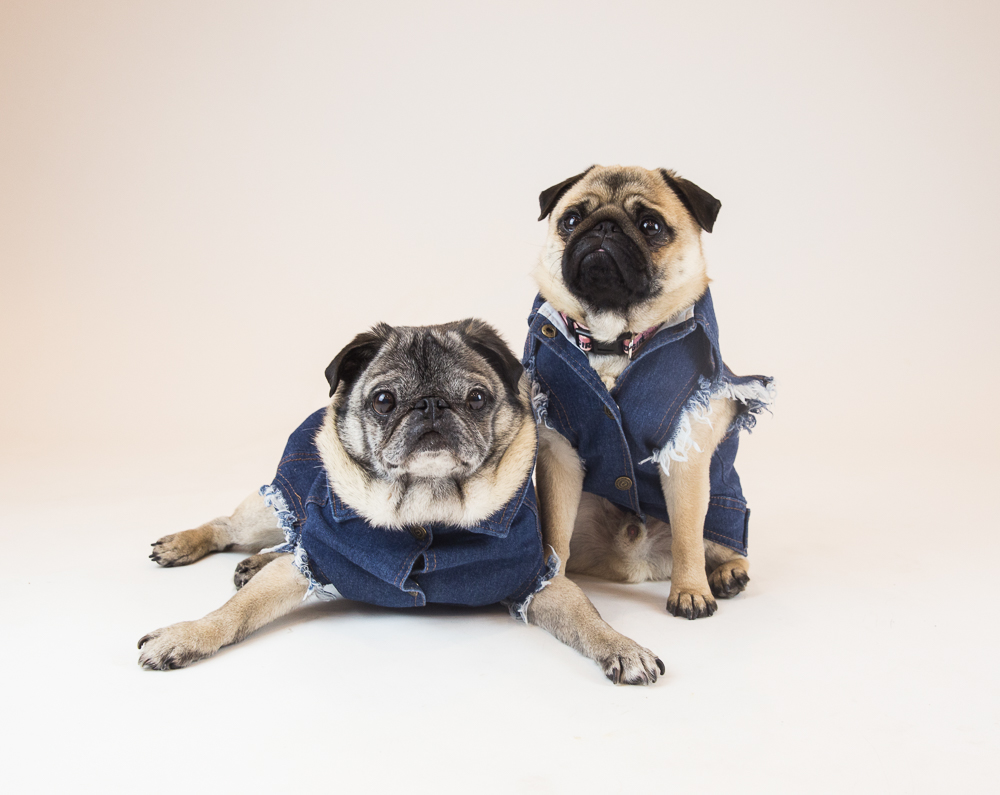 Favourite Goodboy Swag - The Pethaus Raw Denim Vest, of course. They need something stylish for their rides on their parents' Harley. Duh.