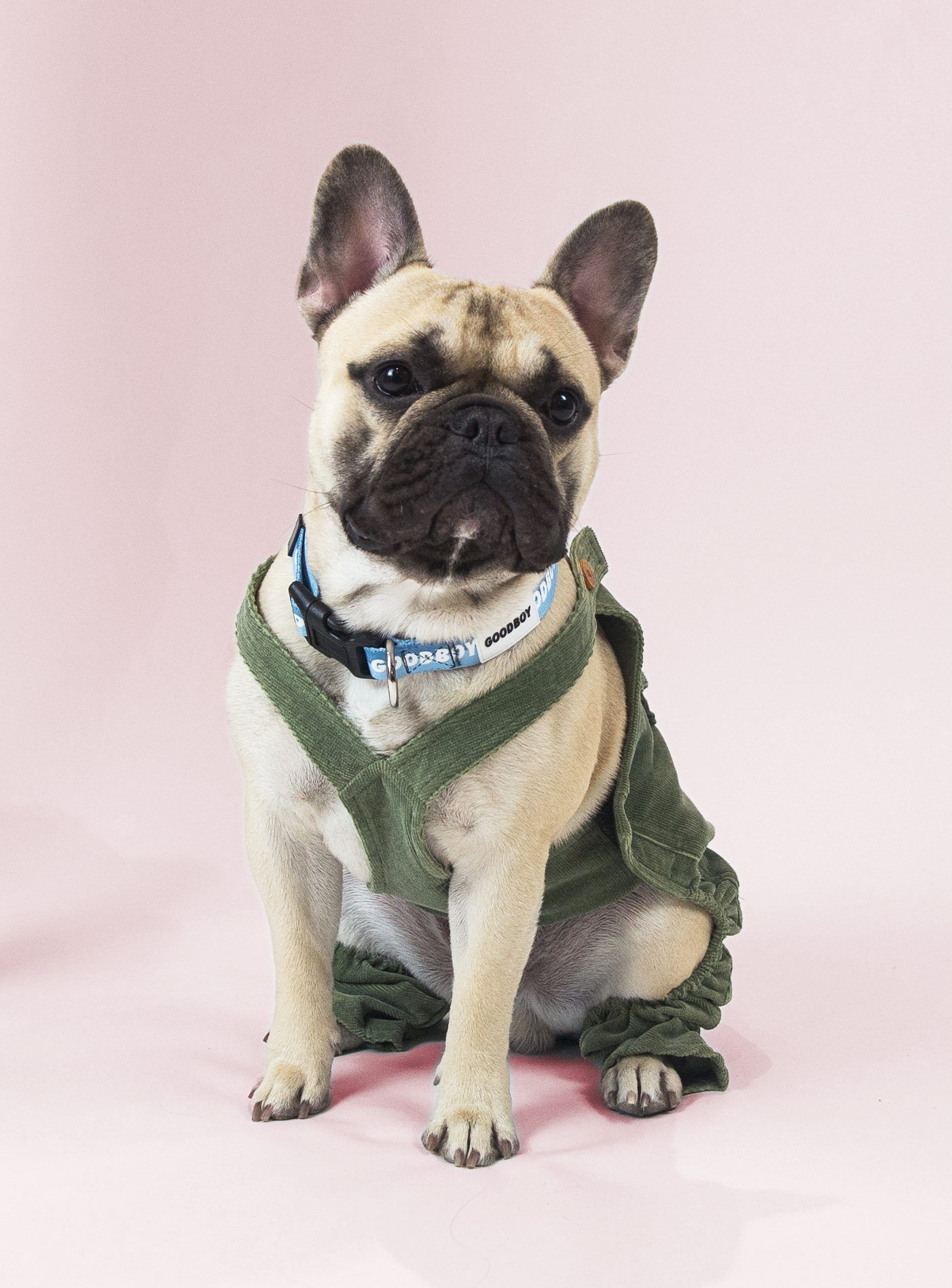 Favourite Goodboy Swag - This stylish little guy loves to dress up. One of his current favourites is the Charlie's Backyard Corduroy Overalls. You might also find him rocking the Barker Baseball Stadium Jumper.